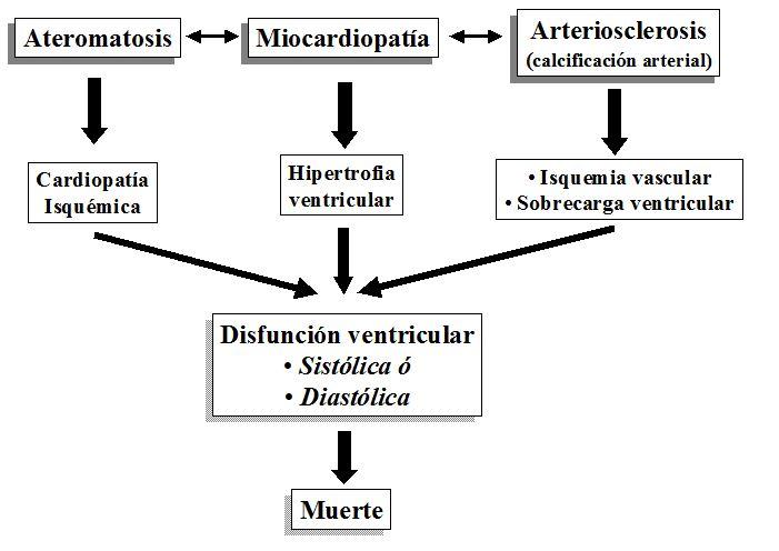 Mecanismos patogénicos de las alteraciones cardiovasculares tras el trasplante renal
