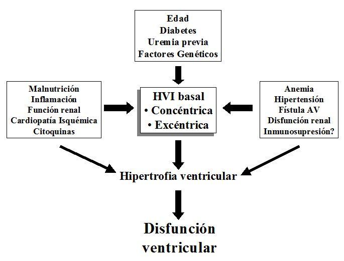 Mecanismos para el desarrollo de hipertrofia ventricular izquierda (HVI) tras el trasplante renal.