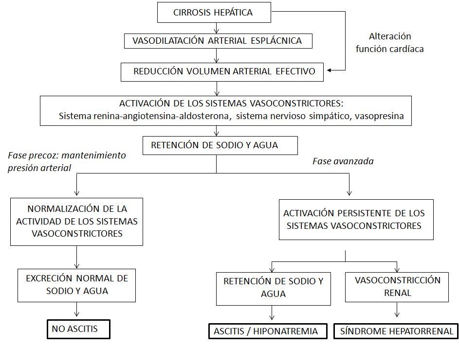 Fisiopatología de las alteraciones de la función renal en pacientes con cirrosis, según la teoría de la vasodilatación arterial.
