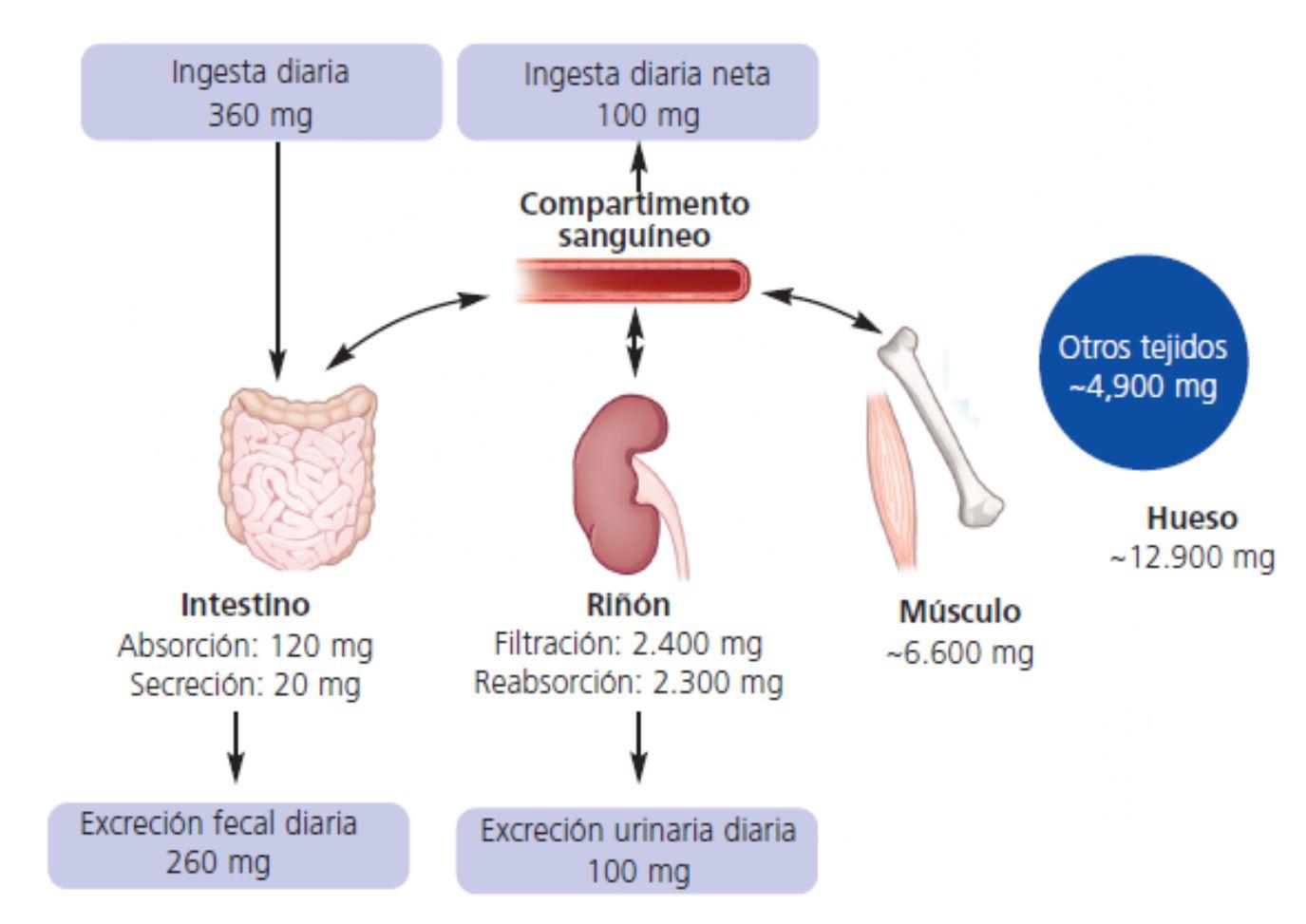 Maneras super fáciles de manejar su Tipos de metabolismo extra