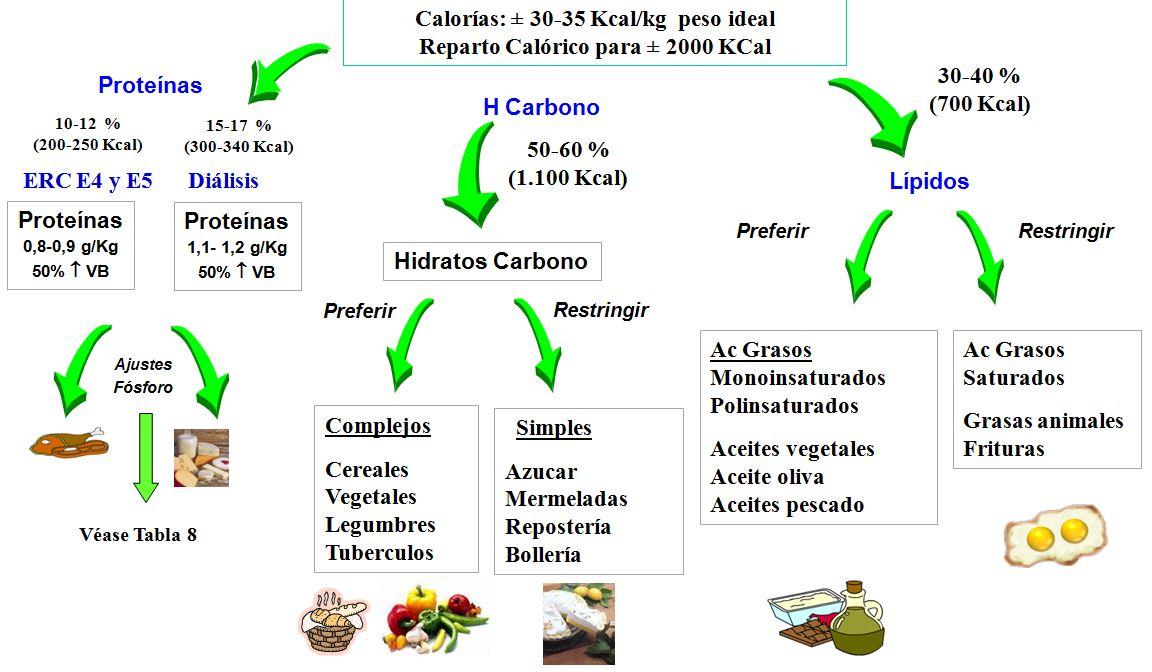 Recomendaciones básicas para el reparto de nutrientes y calorias