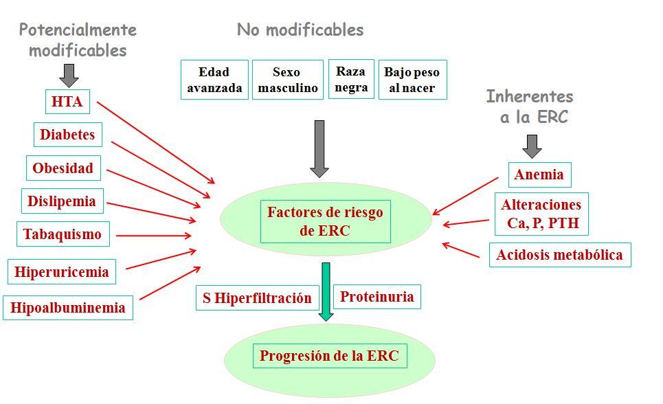 explicar cómo la diabetes mellitus tipo 2 puede conducir a la ERC