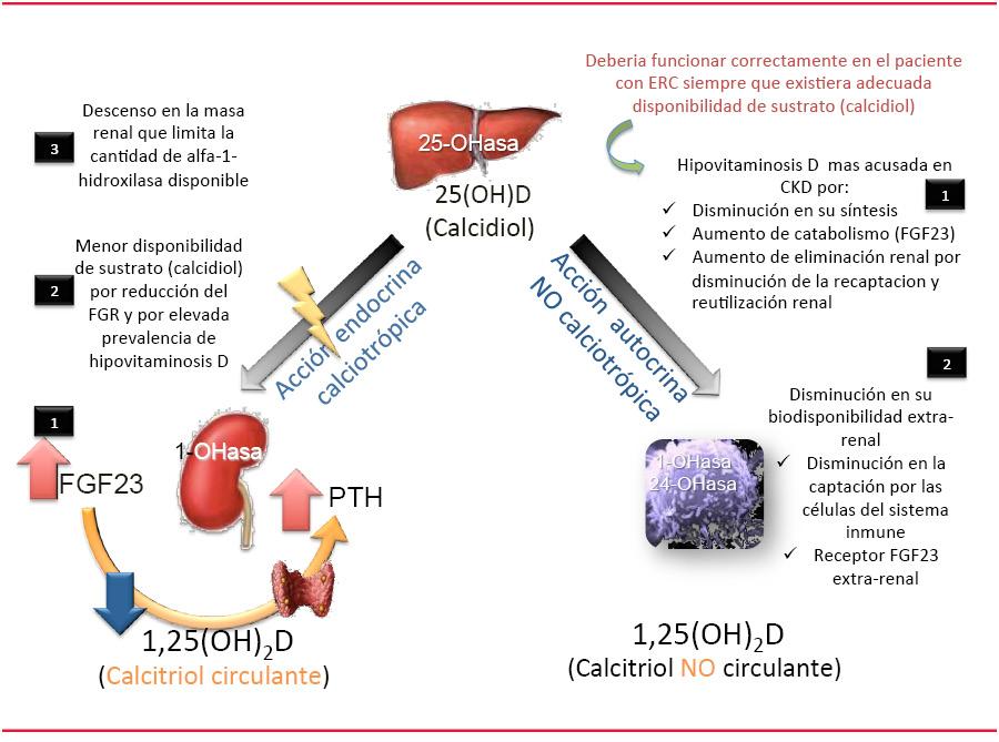 deficiencia vitamina d efectos